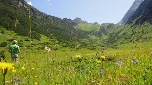 Almwiese im Hochgebirgs-Naturpark Zillertaler Alpen ©Hochgebirgs-Naturpark Zillertaler Alpen