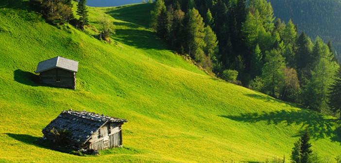 Zillertal Ahorn