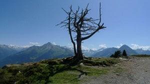 Blick vom Panoramaweg Penken in die Bergwelt der Zillertaler Alpen