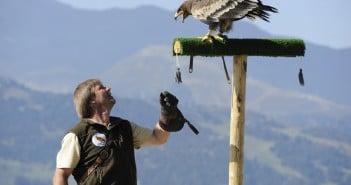 Adlerbühne am Genießerberg Ahorn